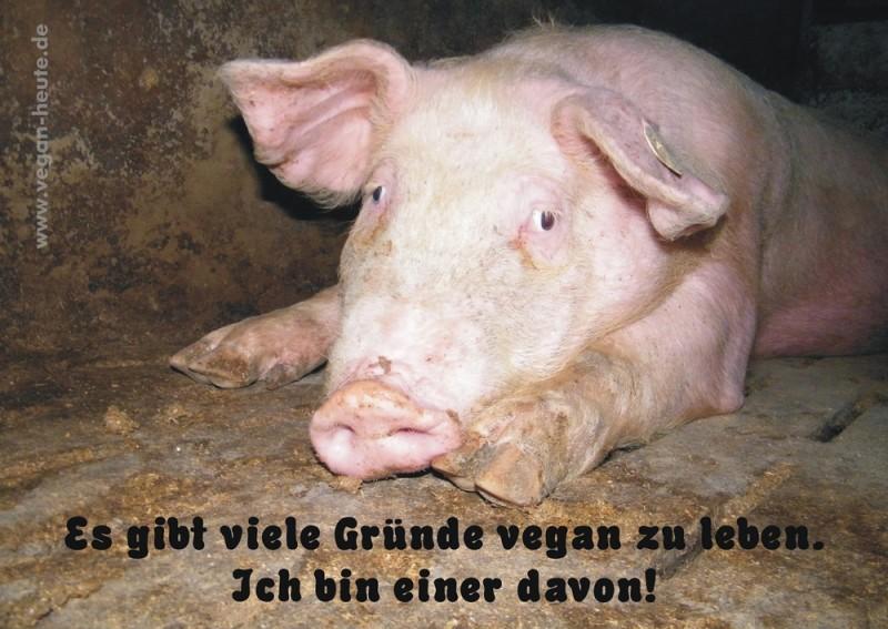 """Aufkleber """"Gründe vegan zu leben"""" DIN A4"""