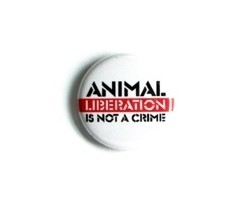 "Button ""Animal Liberation is Not a Crime"""