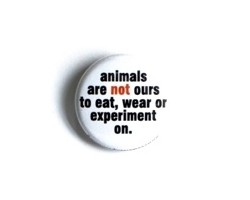 "Button ""Animals are not ours"""