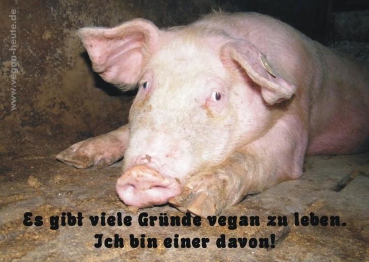 """Aufkleber """"Gründe vegan zu leben"""" DIN-A4"""